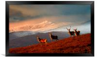 Highland Stags, Framed Print