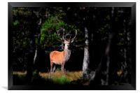 Stag In The Forest, Framed Print