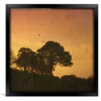 The Rookery (textured), Framed Print