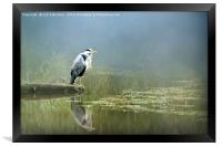The Watchful Heron, Framed Print