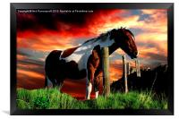Equine Sunset, Framed Print