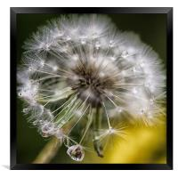 Diamante Dandelion, Framed Print