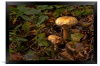 Fungi In The Woodland, Framed Print