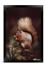 RED SQUIRREL ON AN OLD TREE STUMP, Framed Print