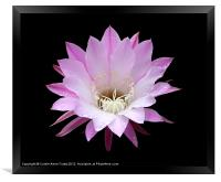 Pink Cactus in the Rain, Framed Print