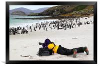 Photographer With Magellanic Penguins, Framed Print