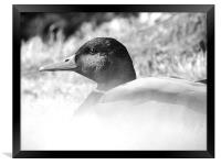 Satisfied Duck, Framed Print