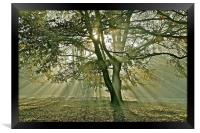 Tree, sun rays, early mist, Framed Print