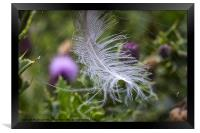 White feather caught in a web, Framed Print