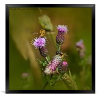 Just buzzin' about, Framed Print