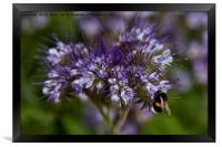 Wild Flowers and a Busy Bee, Framed Print