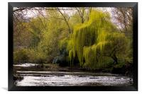 Weeping Willow on River Blyth, Framed Print