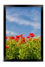 Pretty Poppies Portrait, Framed Print