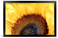 Bright and Colourful Sunflower, Framed Print