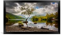 Padarn lake Tree , Framed Print