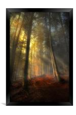 The rays of autumn, Framed Print