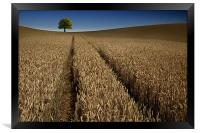 Tree in a sea of wheat, Framed Print