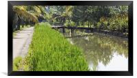 lush rice fields and waterways, Framed Print