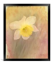 Dancing With The Daffodils, Framed Print