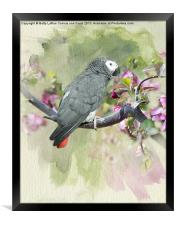 African Gray Among the Blossoms, Framed Print