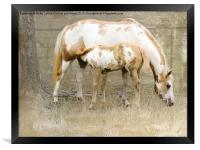 Pinto Mare and Filly, Framed Print