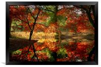 Autumn Spectacle , Framed Print