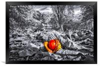 A Lonely Conker, Framed Print