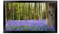 Bluebell wood in texture, Framed Print