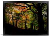 IN THE WOODS, Framed Print