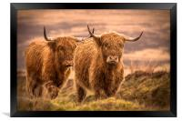 Highland Cattle, Framed Print