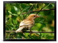 Perched on a Branch                           , Framed Print