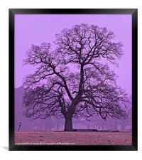 Tree on a winters morning, Framed Print
