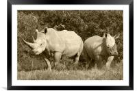 White Rhino and baby, Framed Mounted Print