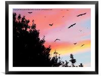 Murder by Sunset, Framed Mounted Print