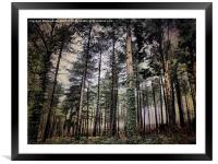 Parkhurst Trees, Framed Mounted Print