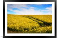 Yellow Field Flowers., Framed Mounted Print