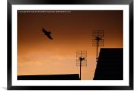 As The Crow Flies., Framed Mounted Print