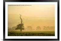 Misty Autumn Morning Tree., Framed Mounted Print