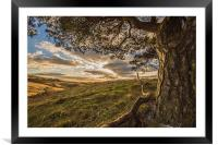 Tree with a view., Framed Mounted Print
