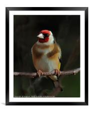 Goldfinch In The Shadows, Framed Mounted Print