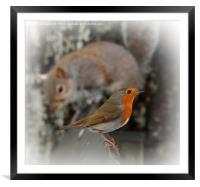 Robin with friend, Framed Mounted Print