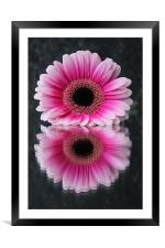 Gerbera - Reflections of Beauty, Framed Mounted Print