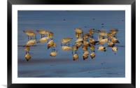 Birds,a different view, Framed Mounted Print