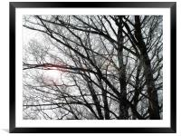Frosty Trees, Framed Mounted Print