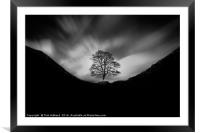Sycamore Gap and the lonely tree, Framed Mounted Print
