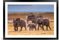 African Elephant Family, Framed Mounted Print