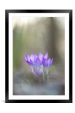 Spring in the woods, Framed Mounted Print