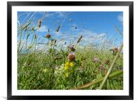 A Wild Flowering Meadow, Framed Mounted Print
