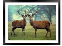 Brothers, Framed Mounted Print