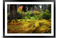 Colorful Carpet of Moss in Benmore Botanical Garde, Framed Mounted Print